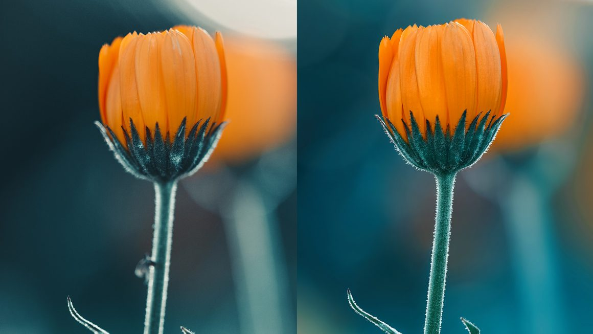 How to focus stack images in Adobe Photoshop